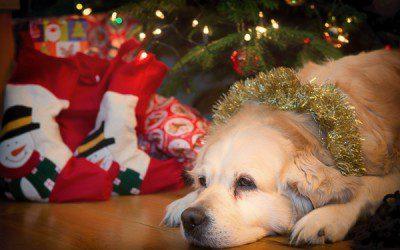 Building Christmas Memories