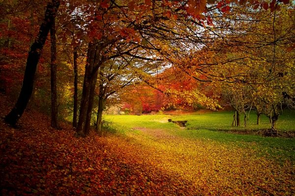 The Gift of Autumn
