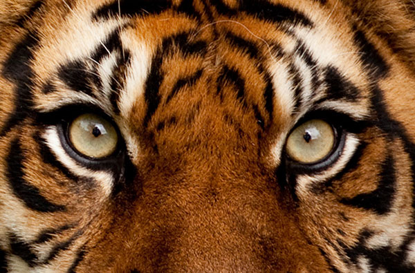 On the right track | Billy Gail's | Eye of the Tiger