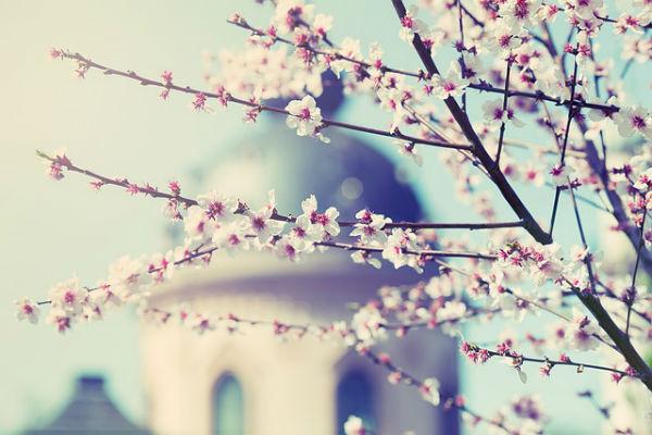 Flourishing - Wholeness of life