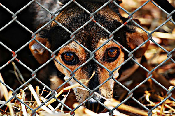 face of sad dog looking through a wire fence