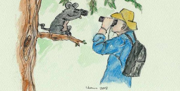 drawing of man looking through binoculars at animal in tree also looking at him through binoculars