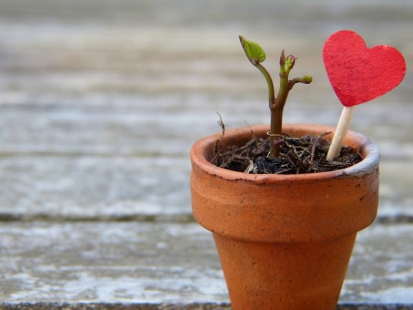 red heart lollipop on stick next to dying plant in a pot