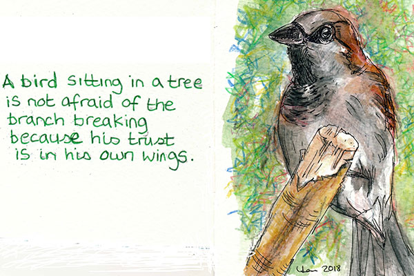 hand drawn picture of sparrow for trust blog Lisa Jones Artist