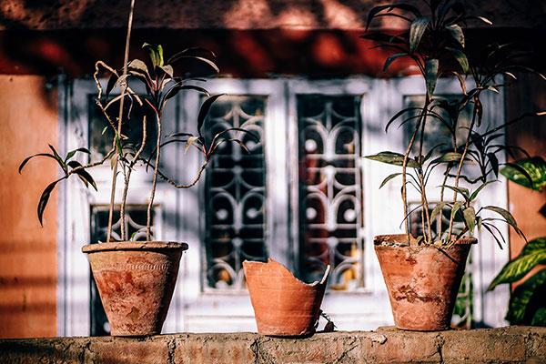 row of three flowerpots