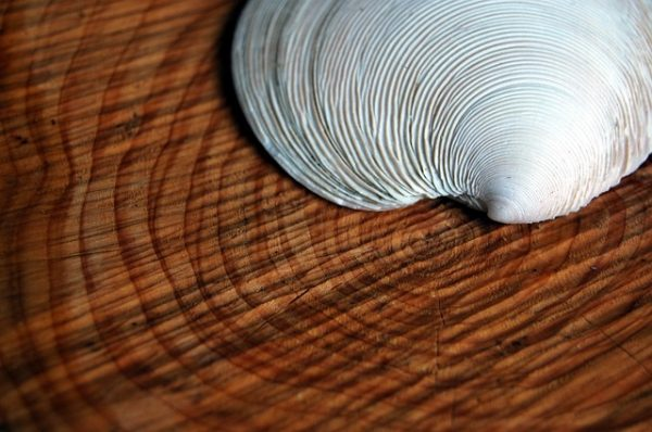 pretty shell sitting on wood blog for the positive psychology people