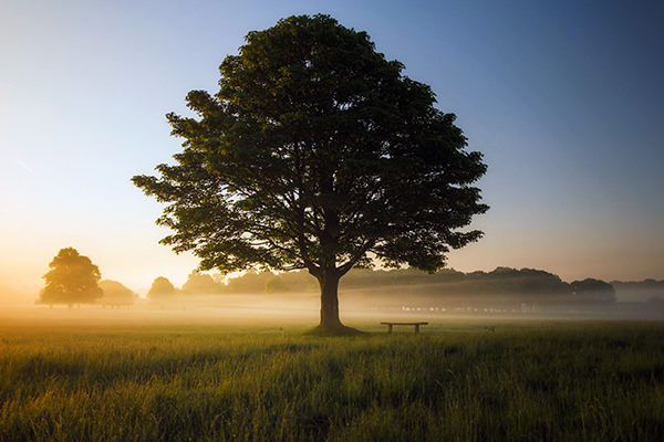 tree standing alone the positive psychology people blog on mindfulness