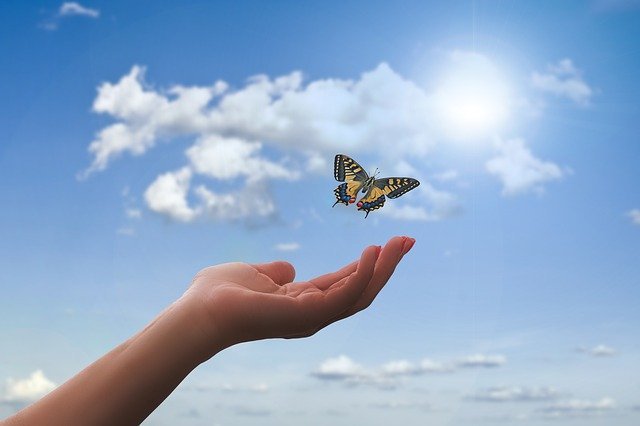 butterfly flying out of hand blog the positive psychology people