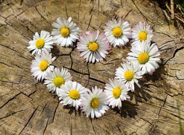 daisy wreath blog the positive psychology people
